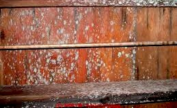 Cupboard Mould